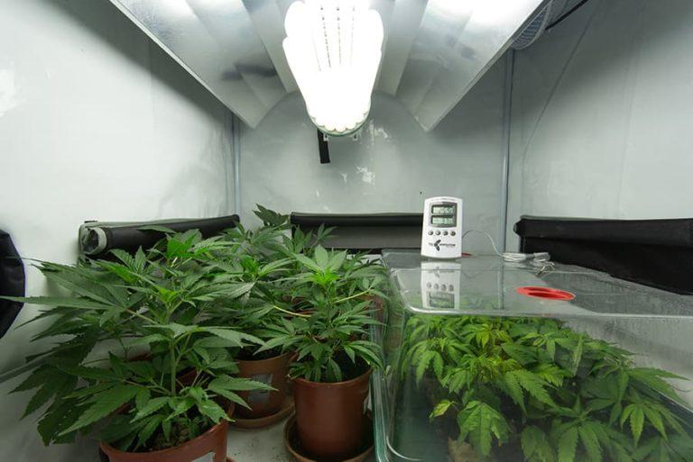 Indoor Grow Room with CFL Light