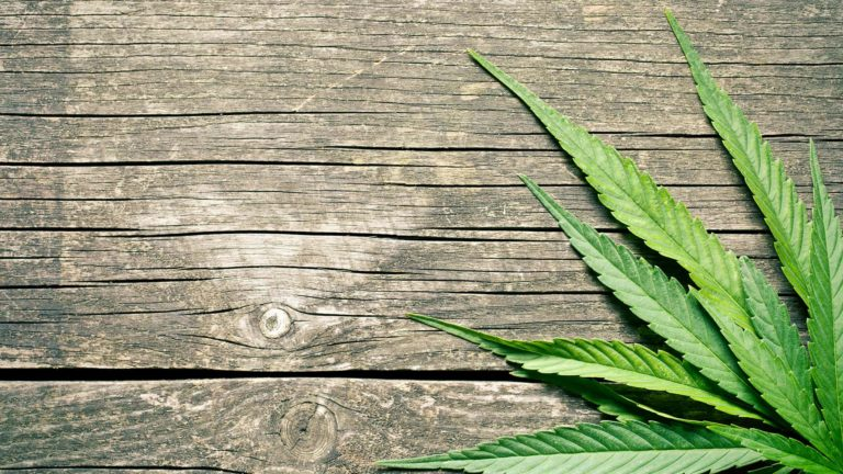 Cannabis on wood background